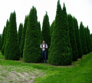 "Туя западная ""Smaragd"" (Thuja occidentalis) С15 1м"